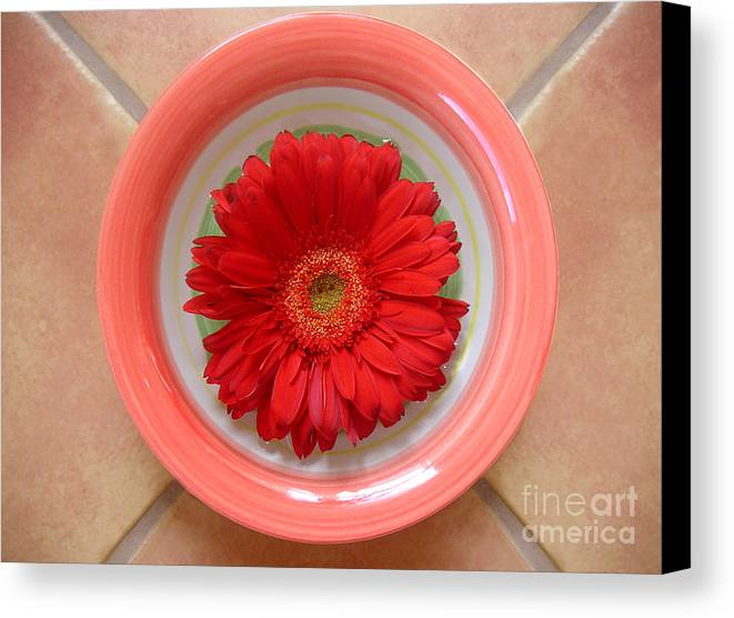 Nature Canvas Print featuring the photograph Gerbera Daisy - Bowled On Tile by Lucyna A M Green