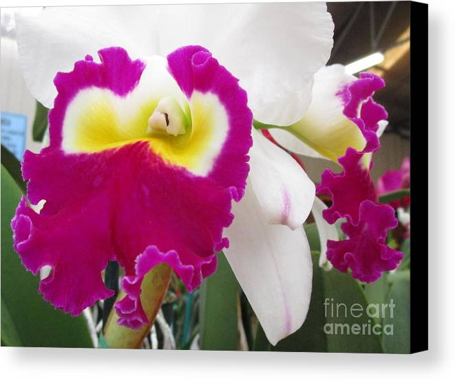 Orchid Canvas Print featuring the photograph Hawaiian Orchid 4 by Randall Weidner
