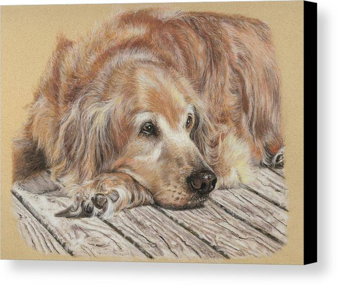 Canine Canvas Print featuring the pastel Lexie by Terry Kirkland Cook