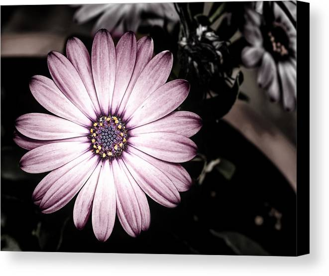 Flower Canvas Print featuring the photograph Purple Flower by Al Mueller