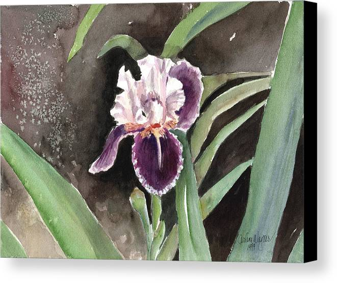 Flower Canvas Print featuring the painting Purple Iris by Arline Wagner