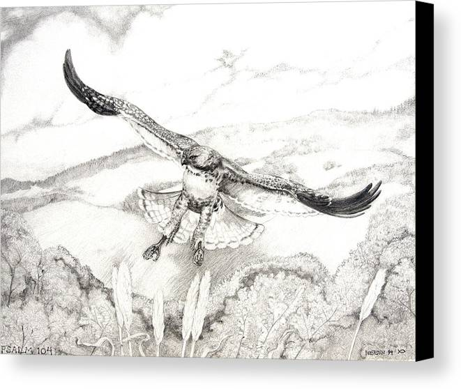 Red-tailed Hawk Canvas Print featuring the drawing Red-tailed Hawk Of Psalm 104 by Jill Iversen