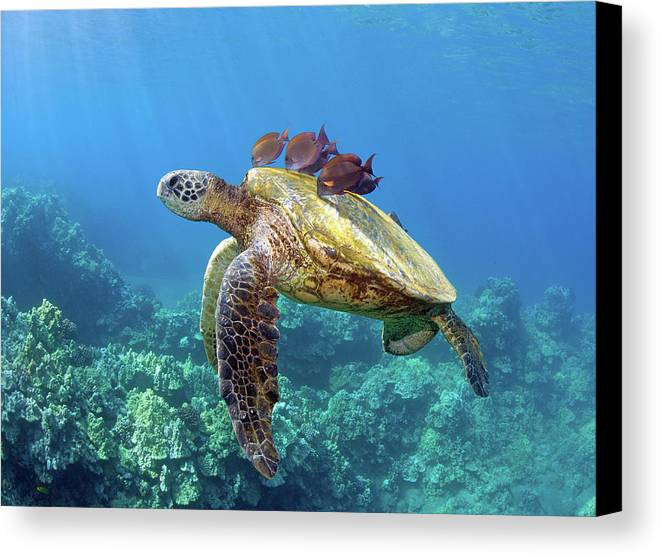 Horizontal Canvas Print featuring the photograph Sea Turtle Underwater by M.M. Sweet