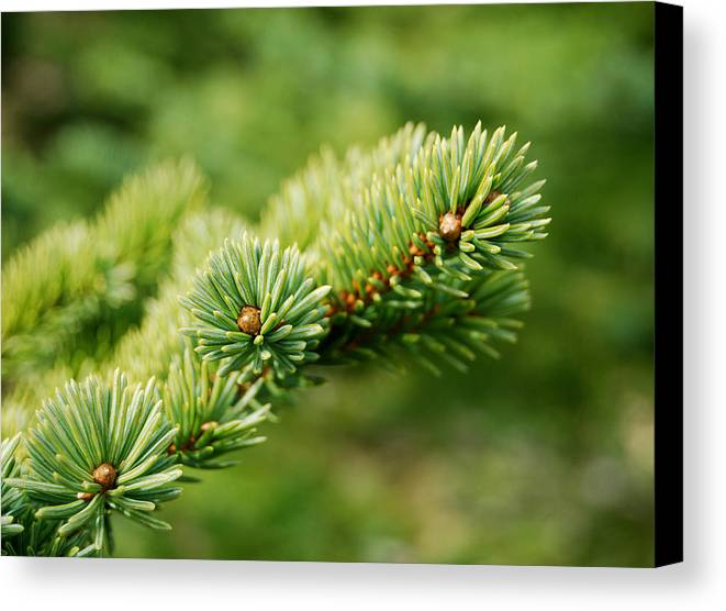 Spring Canvas Print featuring the photograph Spring Green by Marilynne Bull