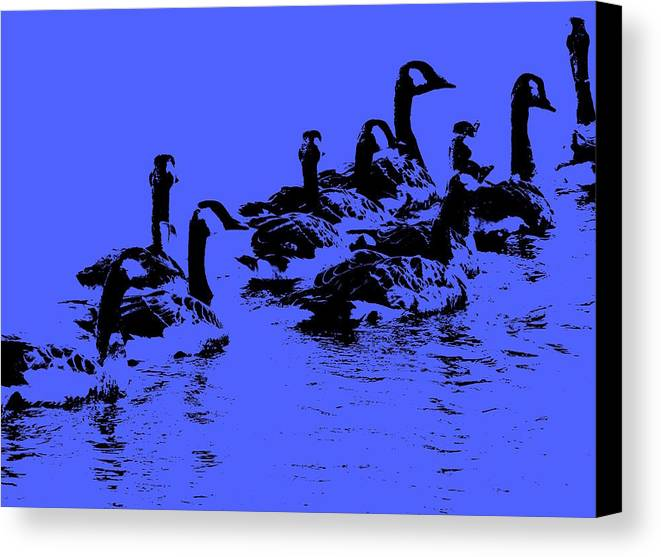 Birds Canvas Print featuring the photograph The Look Out by Ed Smith