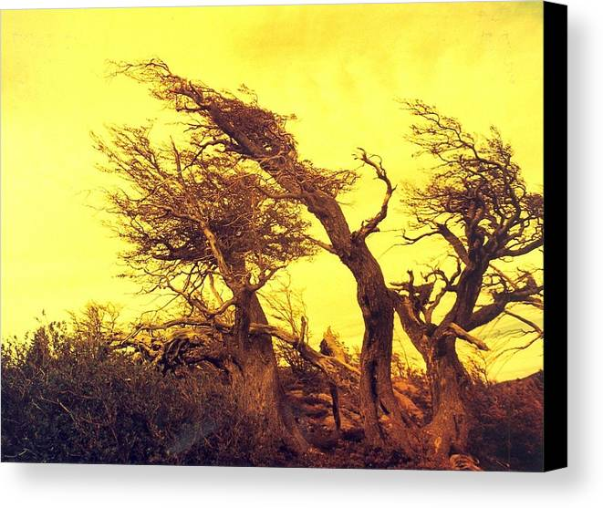 Trees Canvas Print featuring the photograph Wicked Trees by Linda Russell