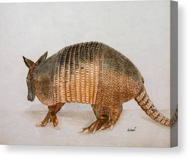 Armadillo Canvas Print featuring the drawing Armadillo by Zina Stromberg