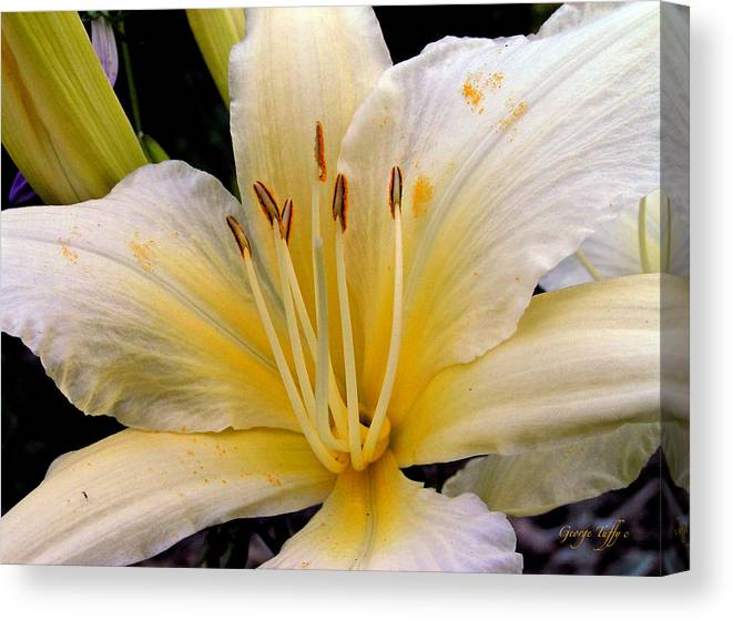 Flower Photography Canvas Print featuring the photograph Beauty by George Tuffy