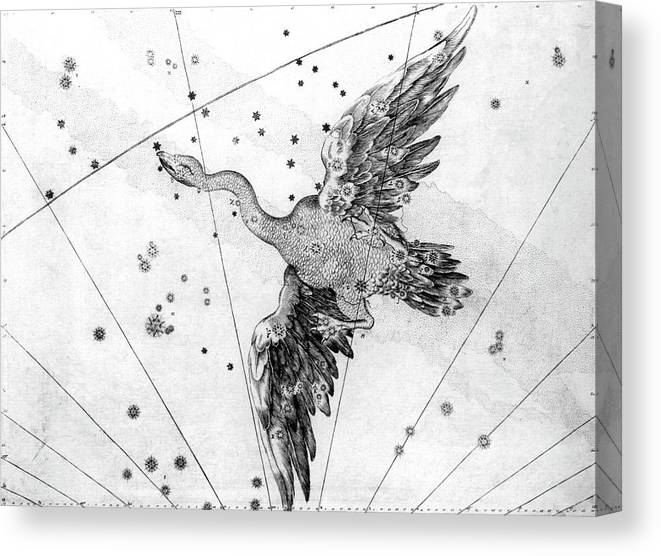 Cygnus Canvas Print featuring the photograph Cygnus Constellation by Royal Astronomical Society/science Photo Library