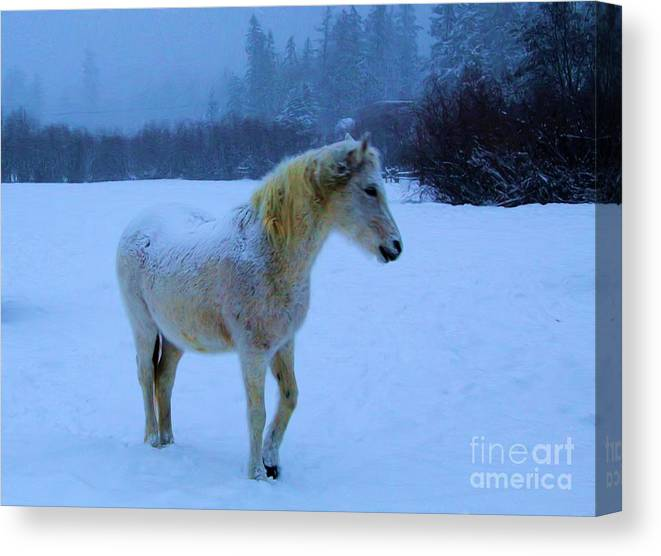Horses Canvas Print featuring the photograph Looking For Hay by Roland Stanke