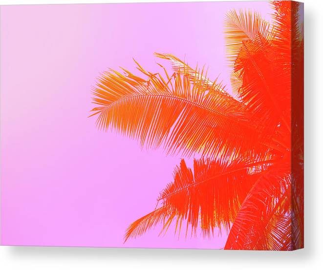 Orange Color Canvas Print featuring the photograph Palm Tree On Sky Background. Palm Leaf by Slavadubrovin