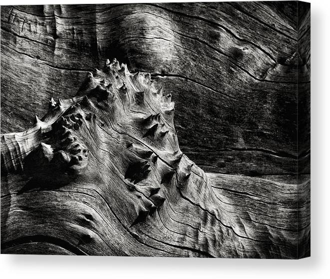 Wood Canvas Print featuring the photograph Weathered Wood by Robert Woodward