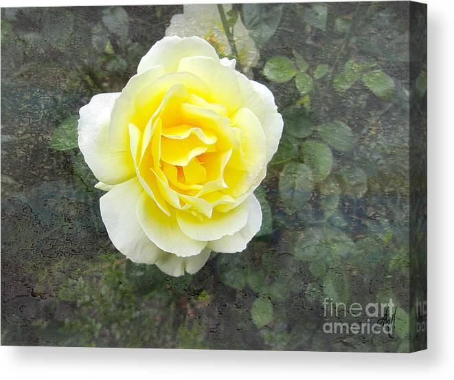 Yellow Rose Of Summer Canvas Print featuring the photograph Yellow Rose Of Summer by Victoria Harrington