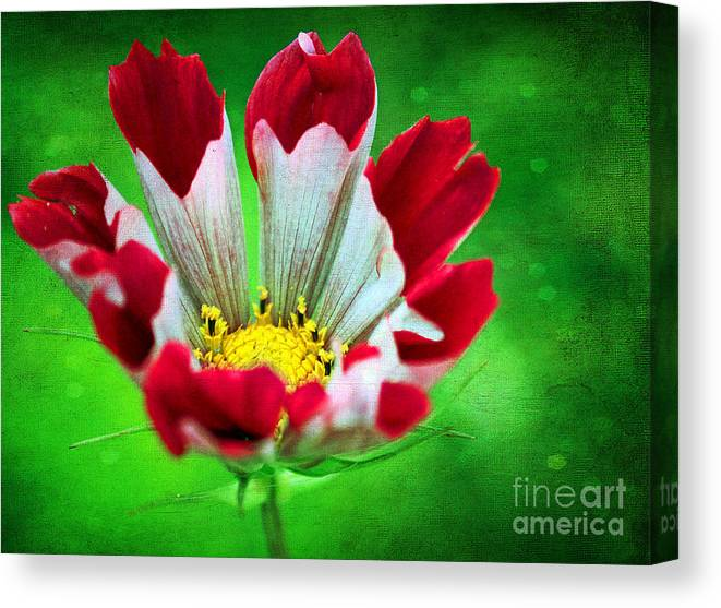 Flower Canvas Print featuring the photograph Flower by Billie-Jo Miller