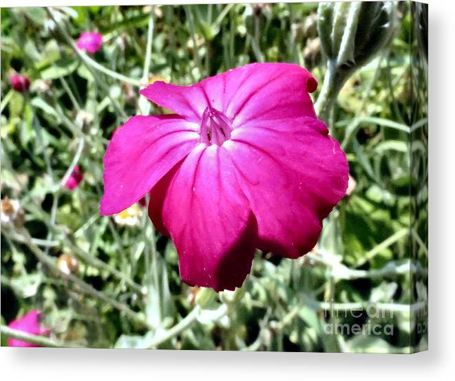 Flower Canvas Print featuring the photograph Magenta by Art Dingo