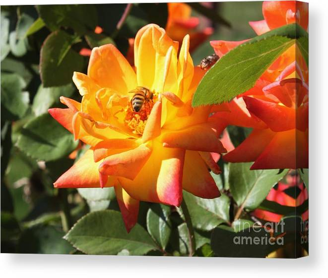 Bee Canvas Print featuring the photograph Bee At Work by Ralph LeCompte