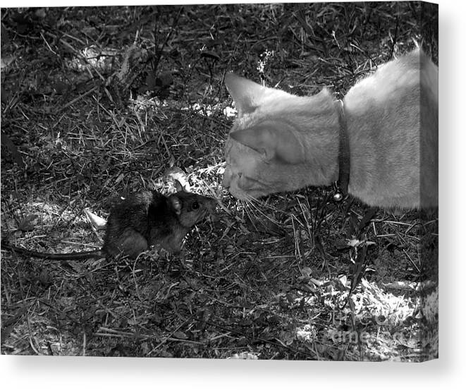 T Canvas Print featuring the photograph Curious by David Lee Thompson