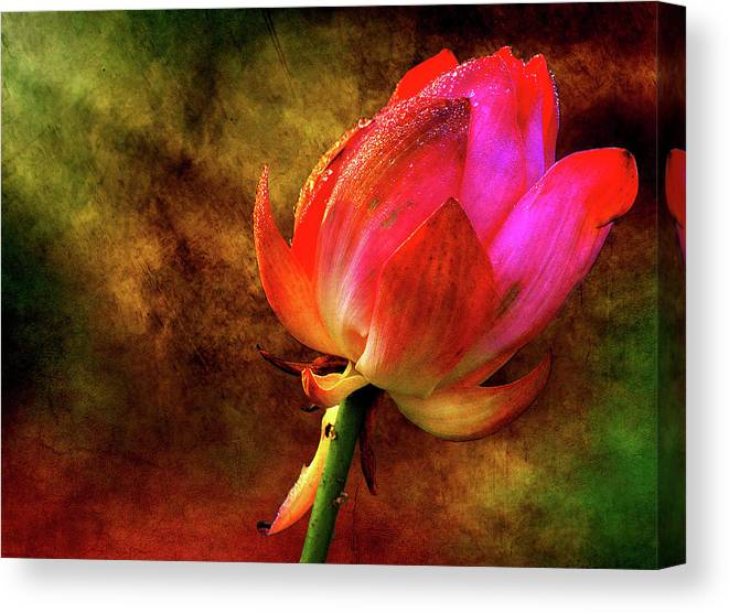 Lotus Canvas Print featuring the photograph Lotus In Texture - A Present For A Friend by Rohit Chawla