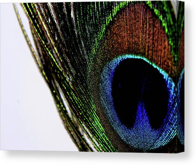 Photograph Canvas Print featuring the photograph Peacock 7 by Stormshade Designs