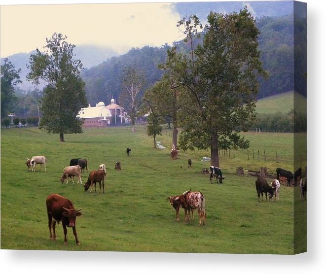 Cows Canvas Print featuring the photograph Rainy Day Longhorns by Cindy Gacha