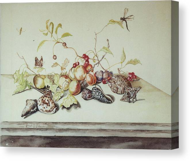 Still Life Fruit Shells Insects Canvas Print featuring the painting Sea Shells by Joseph Valencia