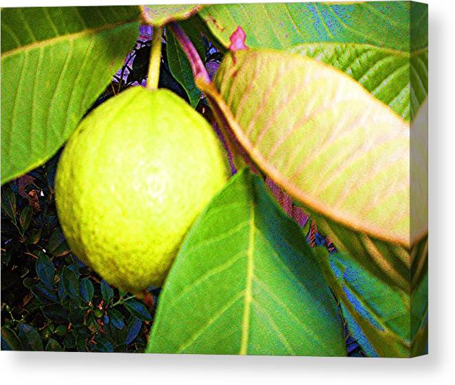 Rose Apple Canvas Print featuring the digital art The Rose Apple by Winsome Gunning