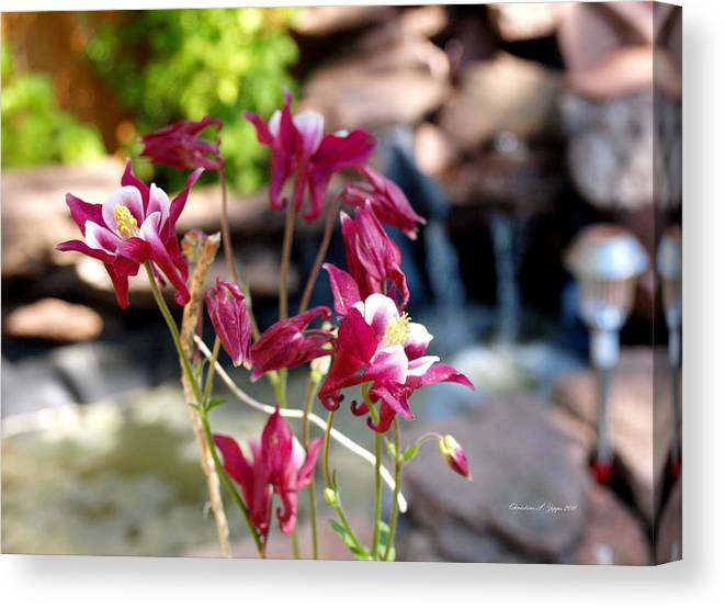 Flower Canvas Print featuring the photograph Waterfall And Columbine I - Pride Of Colorado by Christine S Zipps
