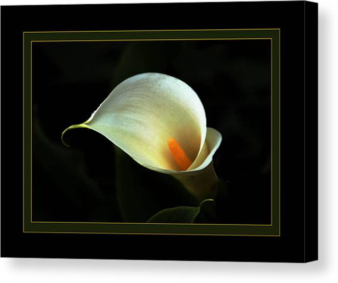 Flower Canvas Print featuring the photograph Lily by Richard Gordon