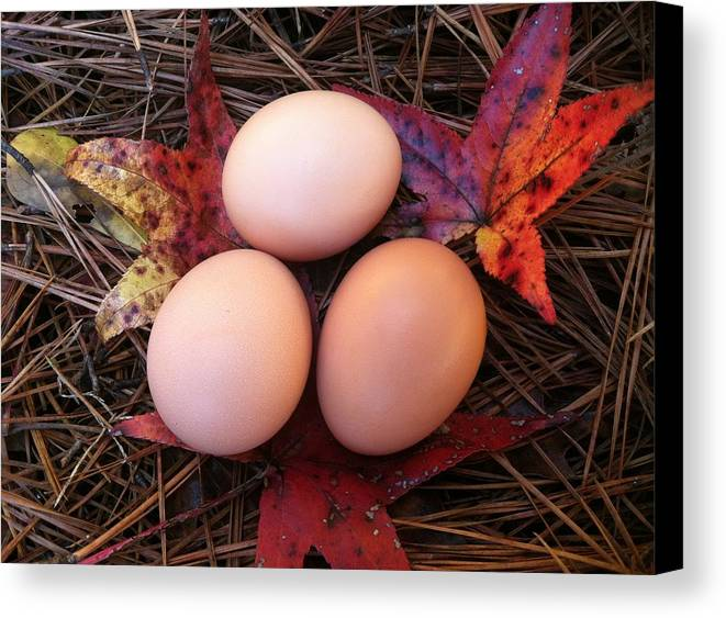 Egg Canvas Print featuring the photograph Autumn Eggs by Marcia B