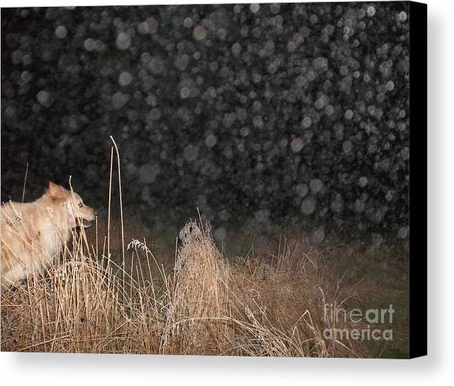 Canine Canvas Print featuring the photograph Catch Me If You Can by Pamela Roberts-Aue