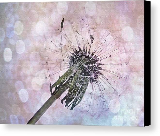 Photography Canvas Print featuring the photograph Dandelion Before Pretty Bokeh by Kaye Menner