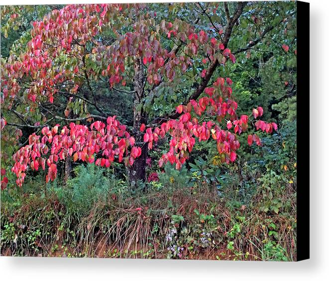 Duane Mccullough Canvas Print featuring the photograph Dogwood Leaves In The Fall by Duane McCullough