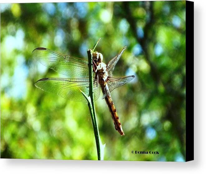 Nature Canvas Print featuring the photograph Dragonfly Magic by Donna Cook