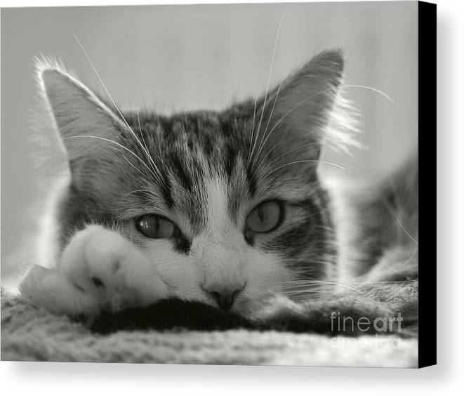 Cat Canvas Print featuring the photograph Dreamer by Szalonaisa Photography