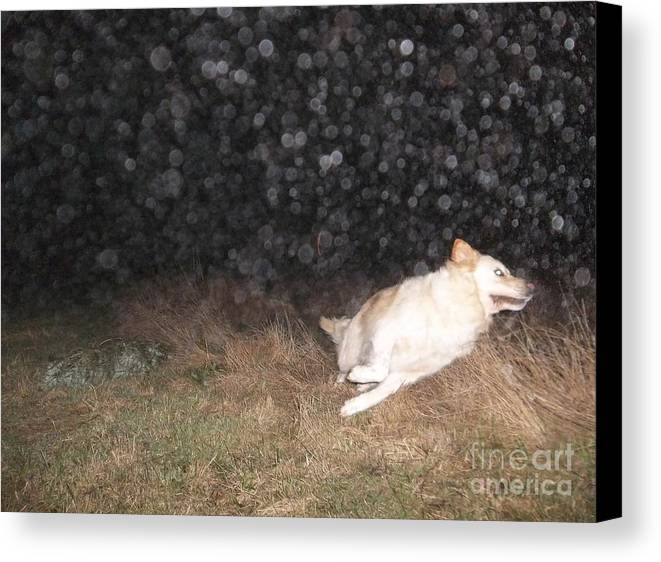 Canine Canvas Print featuring the photograph Go Girl Go Go Go by Pamela Roberts-Aue
