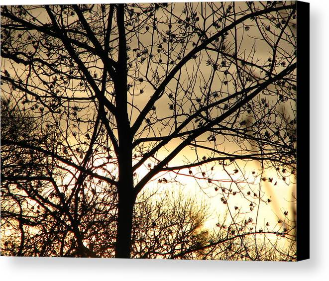 Trees Canvas Print featuring the photograph Gold Sunset by Roxy Riou