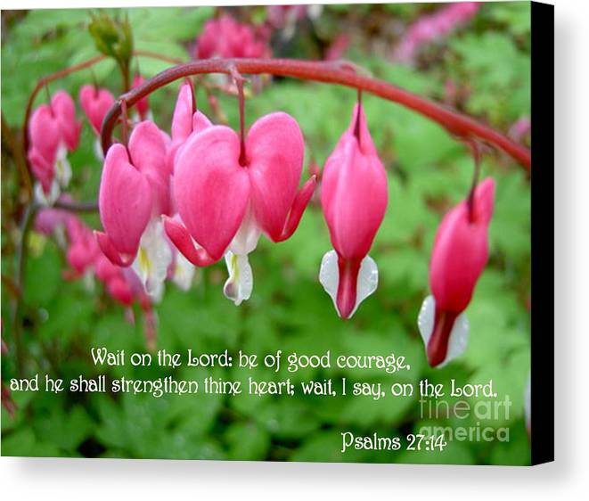 Flowers Canvas Print featuring the photograph Psalms 27 14 Bleeding Hearts by Sara Raber
