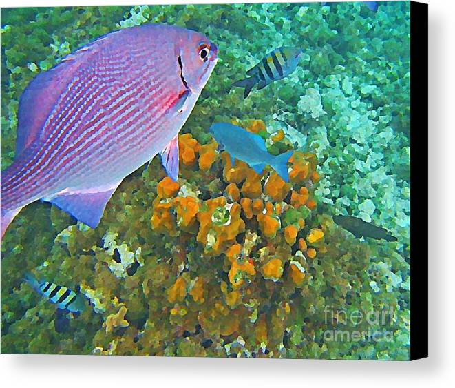 Fish Canvas Print featuring the painting Reef Life by John Malone