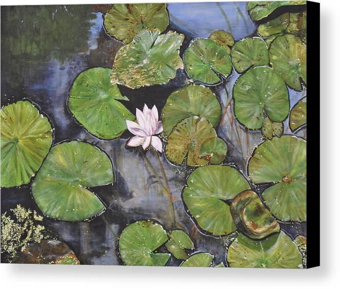 Water Lily Canvas Print featuring the painting Sleeping Beauty by Dottie branchreeves