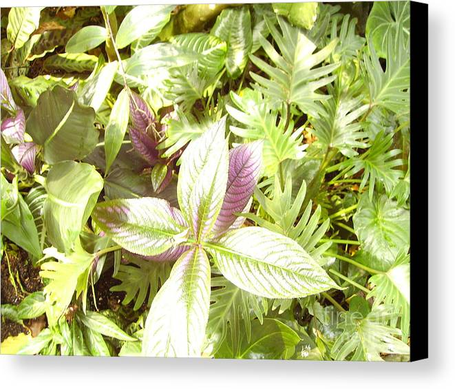 Outdoors Canvas Print featuring the photograph Tropical by Heather Morris