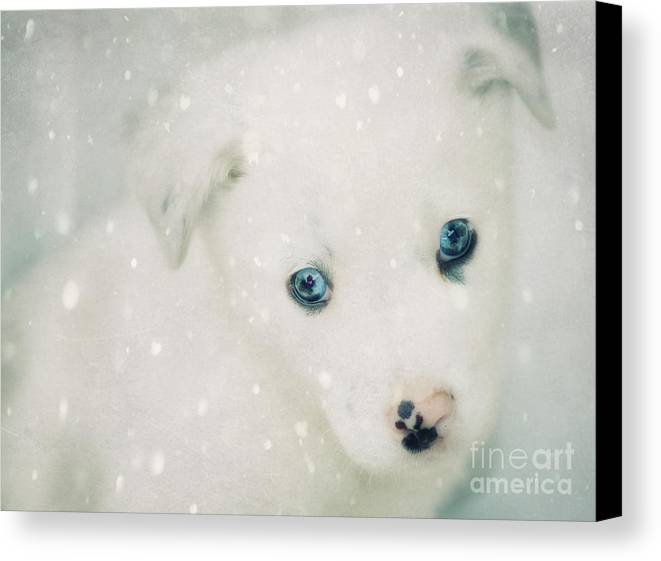 Christmas Canvas Print featuring the photograph Christmas Snow by Billie-Jo Miller