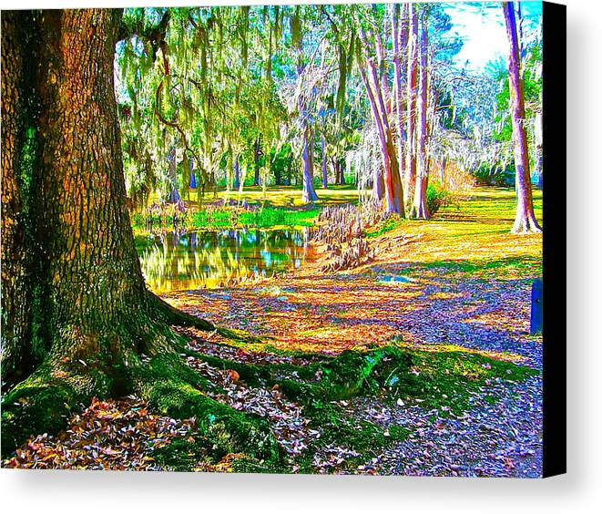 Tree Canvas Print featuring the photograph Cool Feeling by Frank SantAgata