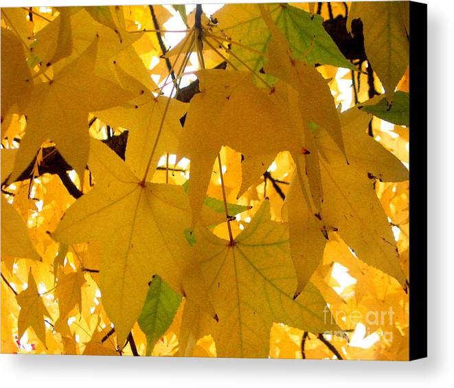 Serenity Scenes Photography Landscape Scenic Pacific Northwest Stream Forest Woods Trees River Rocks Shasta Eone Oregon Water Green Nature Union Creek Fall Colored Autumn Leaves Canvas Print featuring the painting Efx.13 by Shasta Eone