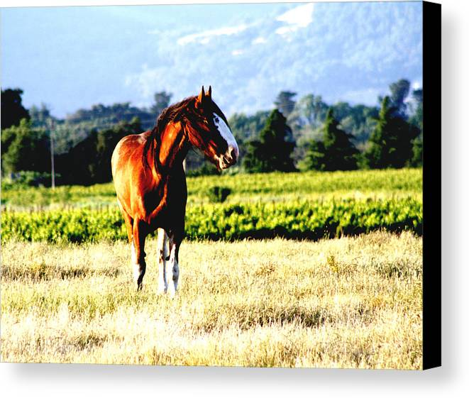 Horse Canvas Print featuring the photograph hOrse by Elizabeth Alamillo
