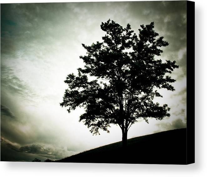 Tree Canvas Print featuring the photograph Arbol by Felix M Cobos