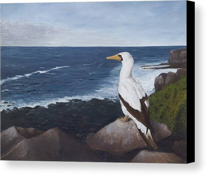 Nazca Booby Canvas Print featuring the painting Beachside View by Elizabeth Rieke Hefley