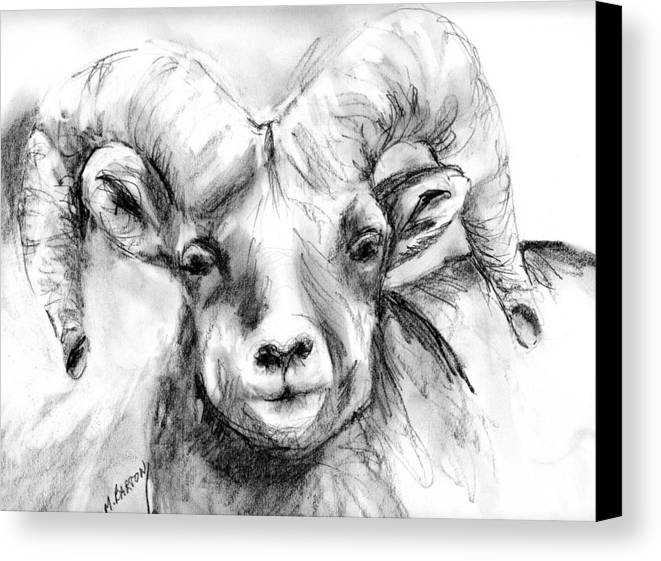 Big Horn Canvas Print featuring the drawing Big Horn Sheep by Marilyn Barton