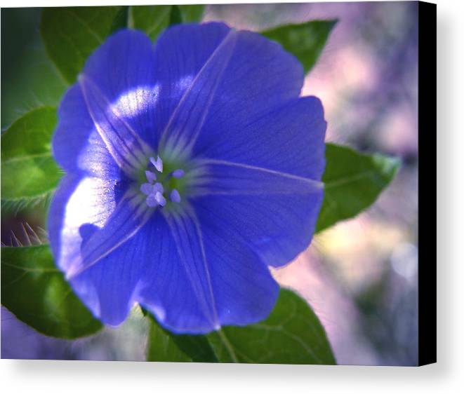 Blue Canvas Print featuring the photograph Blue Star by Ramona Barnhill