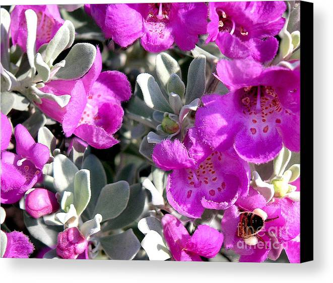 Nature Canvas Print featuring the photograph Bottoms Up by Lucyna A M Green