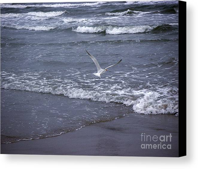 Nature Canvas Print featuring the photograph Creatures Of The Gulf - Tranquility by Lucyna A M Green